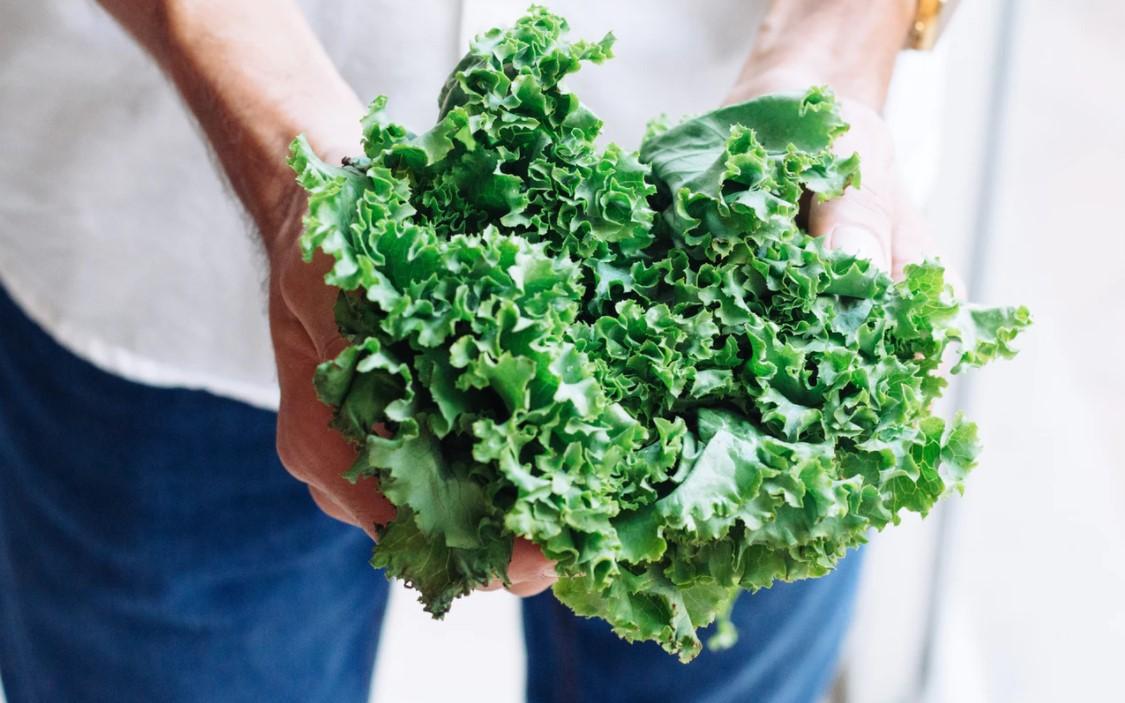 Senior Nutrition & Foods For Brain Power